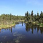 Wnętrze alaskańskiej tajgi (fot.Sebastian R. Bielak)